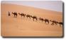 L'apologo del dodicesimo cammello