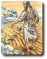 Gesù il seminatore  e il suo modo di seminare